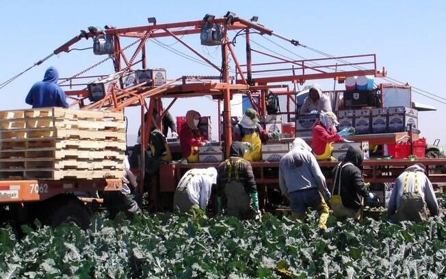 10º lugar: Monsanto (Biotecnologia e Farmacêutico). Foto: Danielle Assalve/iG