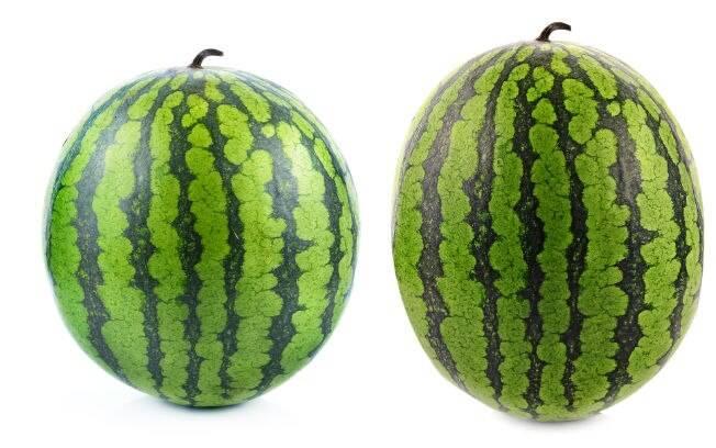 O formato da melancia indica se a fruta está mais aguada ou mais doce