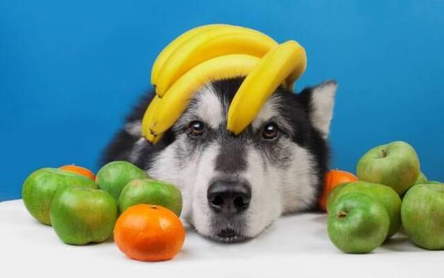As frutas são uma forma de petisco saudável para os animais