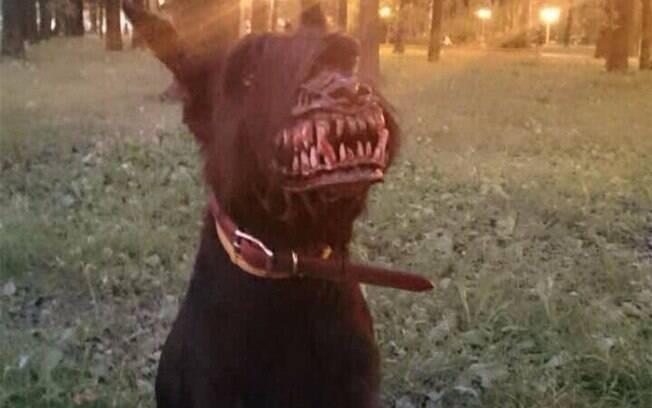 Cachorro usando focinheira