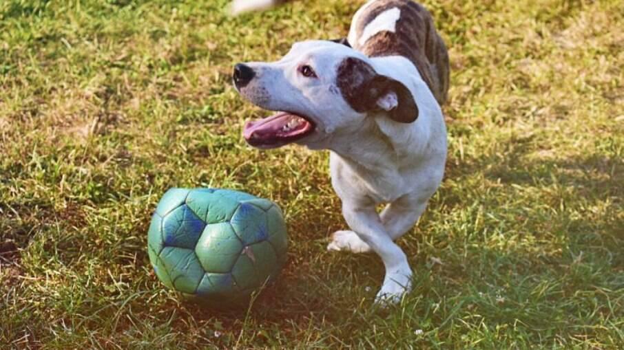 Nomes para pets inspirados em craques do futebol