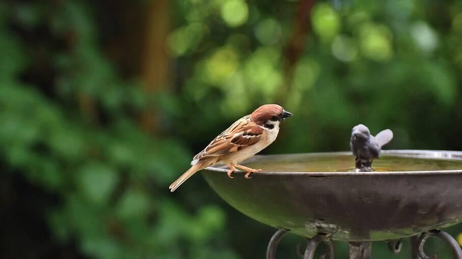 Fontes de água fresca vão atrais os pássaros com sede e também para tomarem aquele bom banho