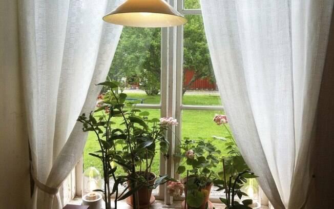 Manter algumas plantas em casa purifica o ar