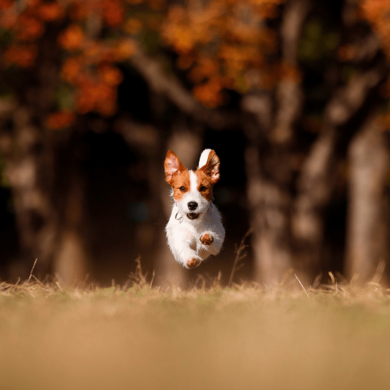 Image of a dog and taken on the Canon EOS 850D