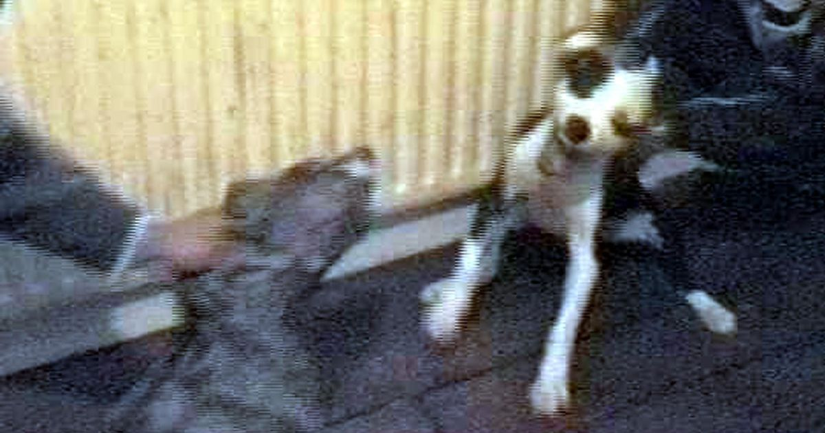 Fights Stolen Dog Dogs