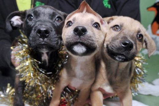 Image result for 3 christmas dogs
