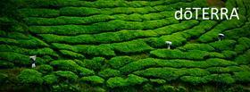 fbheader_greenharvest.133443.jpg