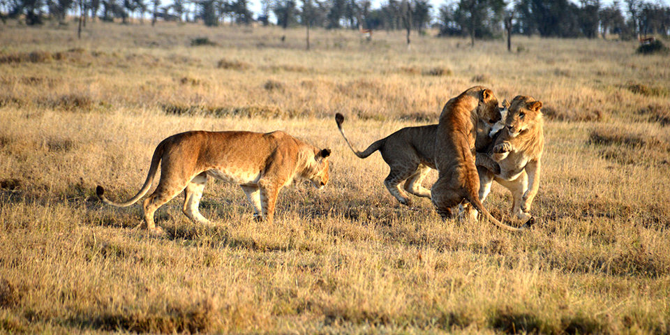 Royal Boys Pride on Ol Pejeta