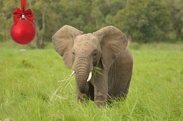 Wild Experiences on Ol Pejeta Conservanvy