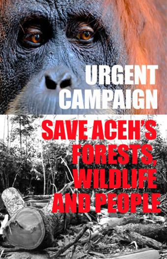 Urgent Campaign: Save Aceh's Forests, Wildlife and People