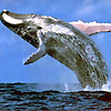Best Whale Watching in Massachusetts
