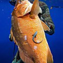 Spearfishing Jamaica Lifestyle