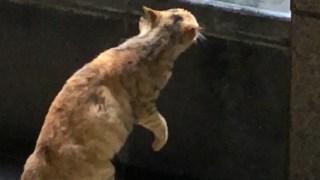 正在吵架的猫