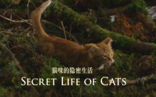 【OSF】猫咪的隐秘生活【1080p】【双语特效字幕】【纪录片之家爱自然】