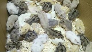 仓鼠】这里有好肥一鼠鼠电影• 52movs com