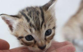 小奶猫长大了,猫妈妈叼不走了,又是吸猫的一天