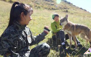 无不凶残的野狼,被新疆美女8年养成二哈,网友:说好的狼性呢?