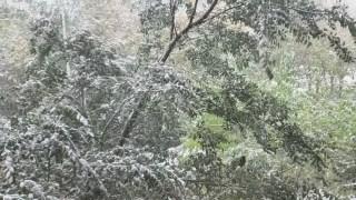 三星s10凝视摄影拍摄雪景