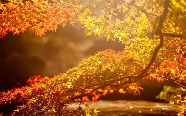 「文藝向」這些成語竟然都和秋天有關!全都知道的人不一般…… - 每日頭條
