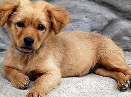 狗狗身上出現紅斑,脫毛,就像人的皮膚一樣,那有什麼防禦措施? - 每日頭條