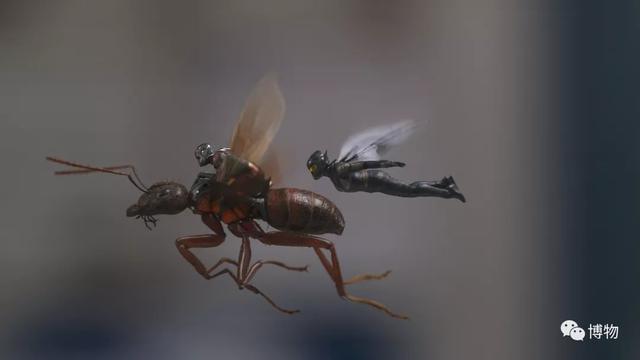 蟻人和黃蜂女 本來就是一家人?! - 每日頭條