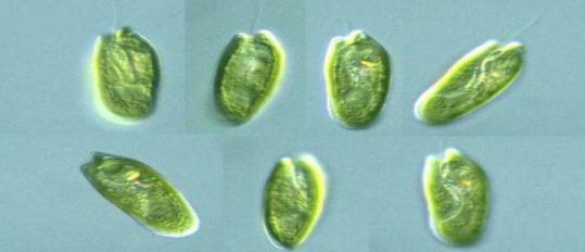 水產養殖戶如何調控好池塘藻相 - 每日頭條