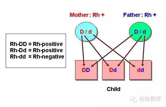 檢驗報告與臨床「不符」釋疑|Rh到底是陰性還是陽性? - 每日頭條