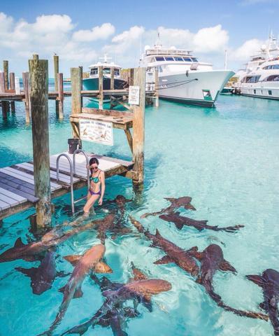 巴哈馬:豬島+鯊魚島+蜥蜴島+拖尾沙灘+浮潛一日游攻略 - 每日頭條