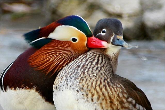 自然界鳥類所象徵的意義你知道嗎? - 每日頭條