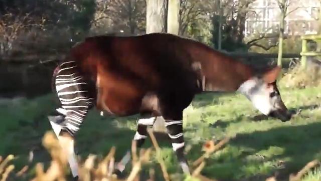 非洲三大稀有動物你造嗎? - 每日頭條