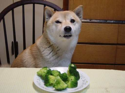 Image result for broccoli dog