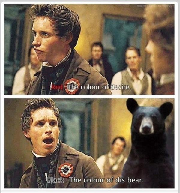 The Color Of Dis Bear