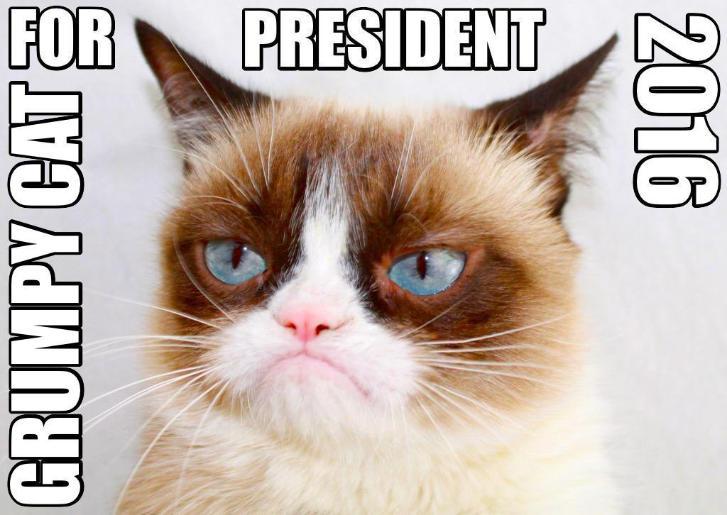 GRUMPY CAT FOR PRESIDENT 2016 Grumpy Cat Know Your Meme