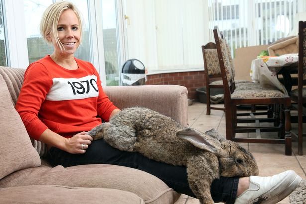 самый длинный кролик в мире