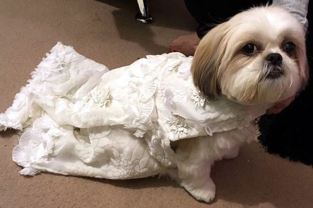 Elvis and Bella's Dog wedding