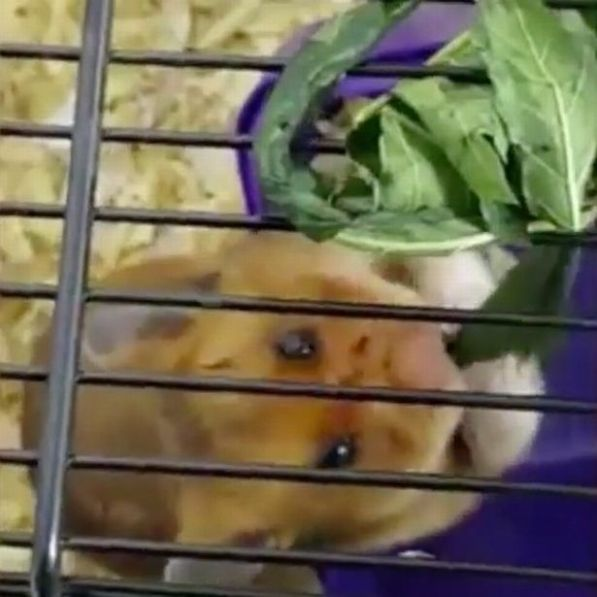Cruel thug gives hamster LSD then films its reaction