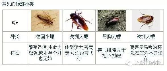蟑螂到底愛吃什麼,費盡腦汁也想不到 - 壹讀