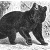 The Bear, the Dog and the Cat - A Russian Folktale mp3