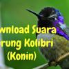 Suara Burung Kolibri Pikat mp3