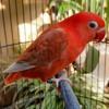 Suara pikat burung kecil ampuh mp3.mp3 mp3
