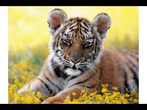 Happy Birthday From Tigger The Free Funny Birthday Wishes ECards 123 Greetings