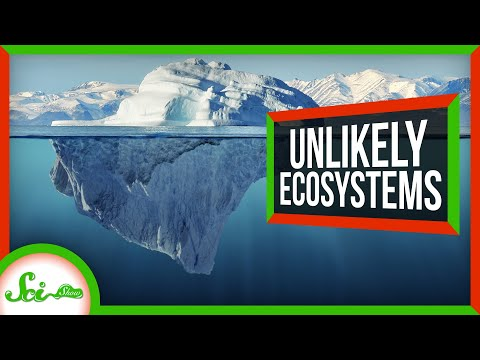 5 Ecosystems Thriving in the Least Likely Places