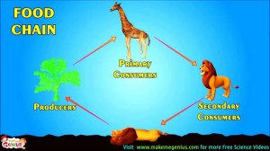 Food Chains , Food Webs , Energy Pyramid  Education Video for kids by makemegenius  YouTube