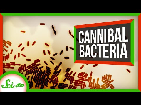 Thank Goodness for Bacterial Cannibalism