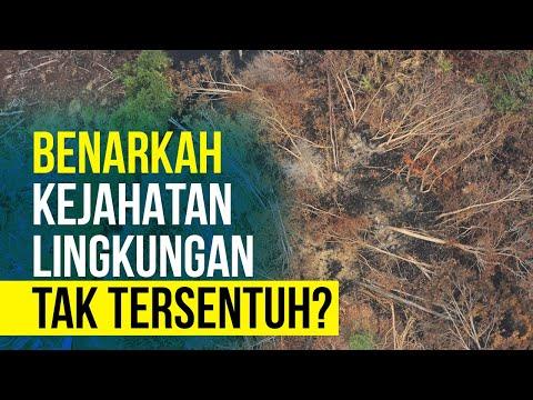 Mafia Rusak Lingkungan dan Raup Untung Rp4.000 Triliun Setahun