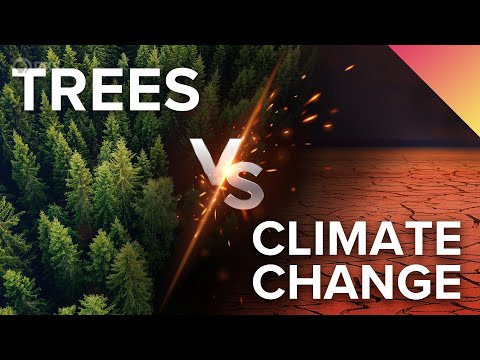 3 Ways Trees Can Save the Climate (With Our Help)