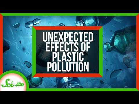 3 Unexpected Effects of Plastic Pollution