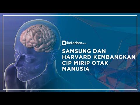 Samsung dan Harvard Kembangkan Cip Mirip Otak Manusia | Katadata Indonesia