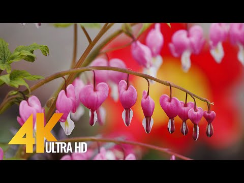 Beautiful Backyard Flowers on a Sunny Day - 4K Relaxation Video & Calm Garden Sounds - 7 HOUR