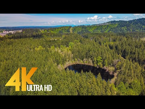 4k Around the Lake Trail, Tiger Mountain - Forest Walk - Short Preview Video